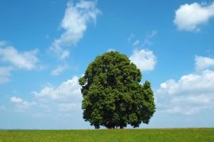 tree-1491526_1920