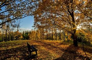 autumn-1700036_1920